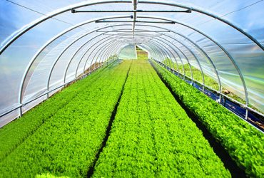 Greenhouse & Agricultural Films In Doha Qatar